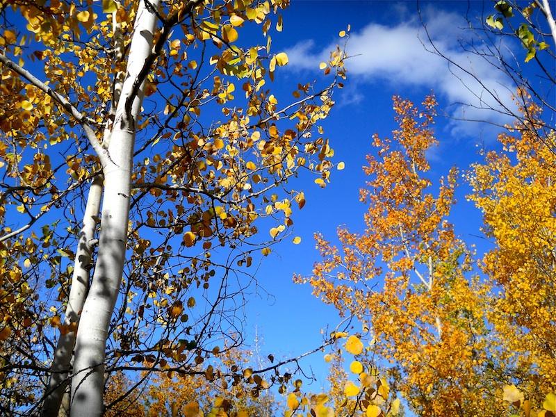 fall trees 1147