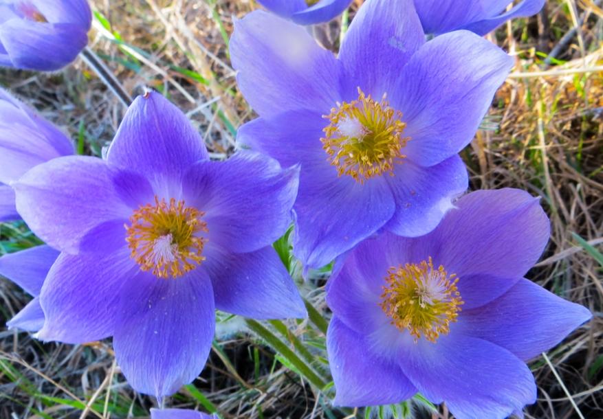 spring-0014