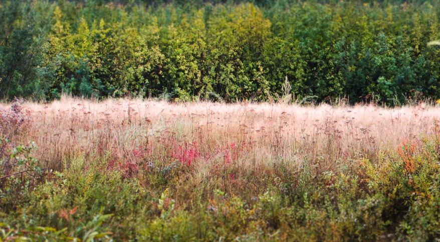 fall foliage-0131
