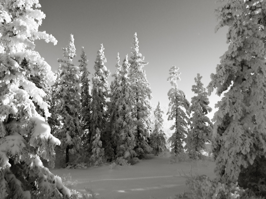 frosted trees-0289