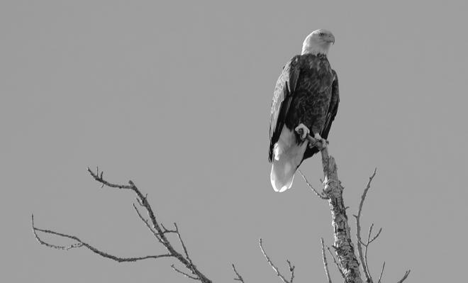 eagle-0917