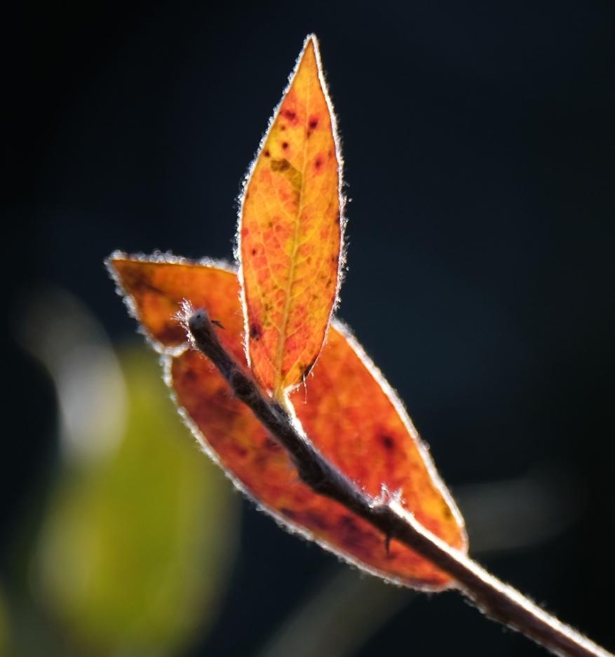 fall-0723