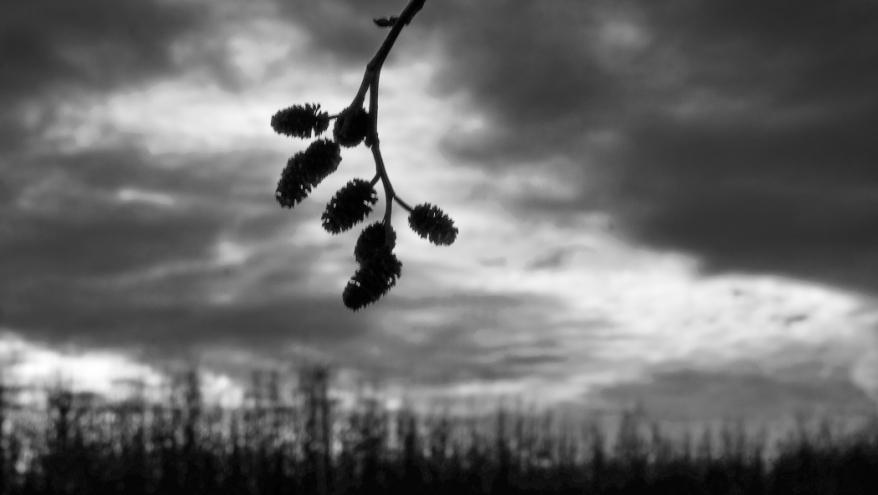 treesntracks-1216