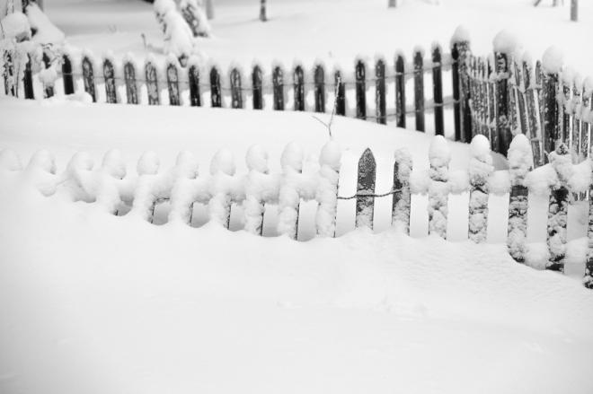 snow-2926