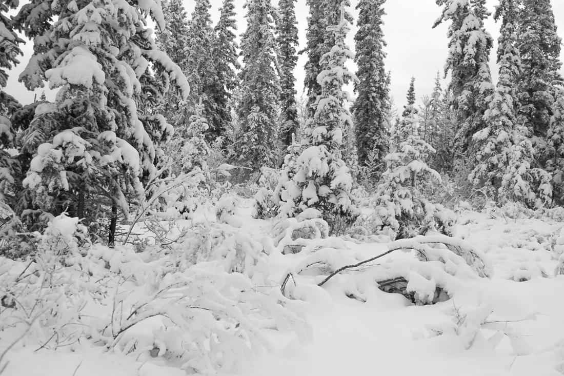 snow-2936