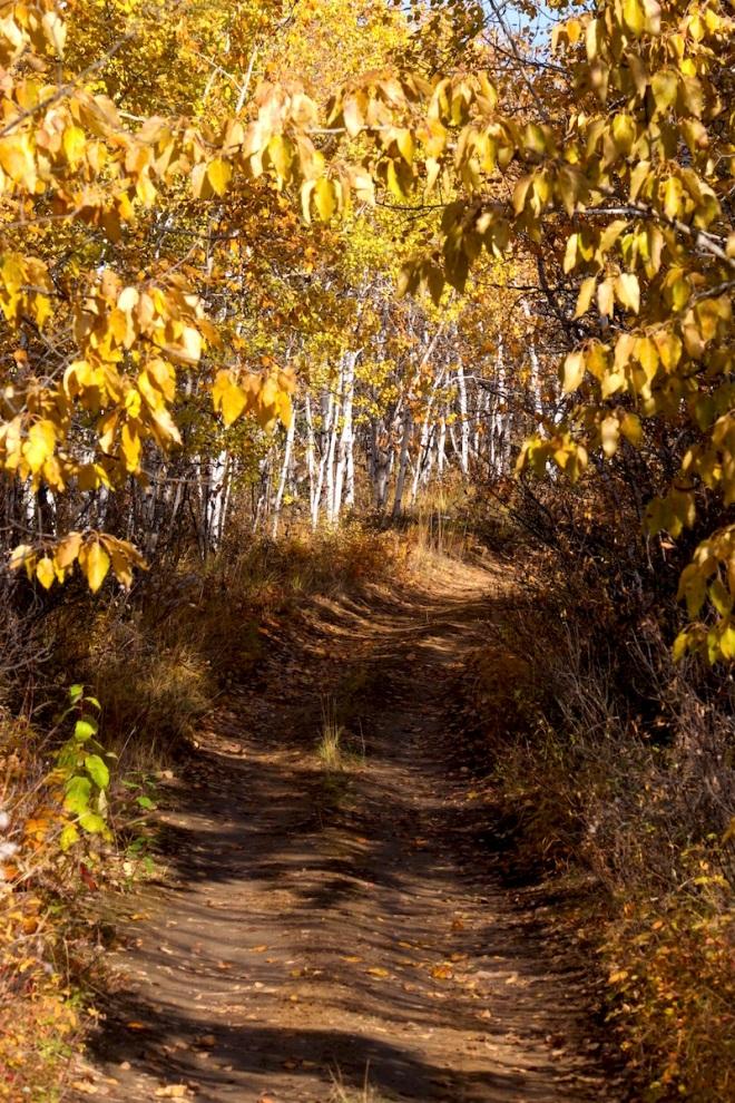16-2798-trail